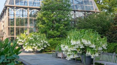 Qué es un Jardín Botánico