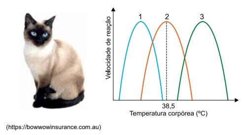 O gráfico apresenta três curvas e apenas uma delas é compatível com a atividade da enzima tirosinase.
