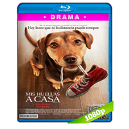 Mis huellas a casa (2019) BDRip 1080p Audio Dual Latino-Ingles