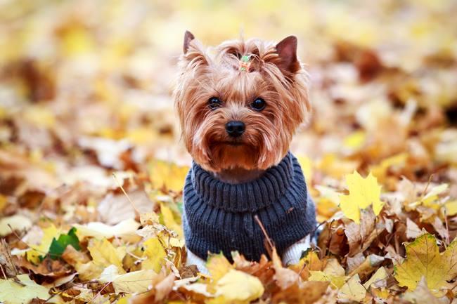 Jak dbać o sierść psa jesienią?
