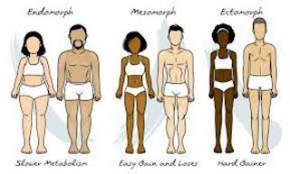 different body types, ectomorphs, endo morphs, mesomorphs