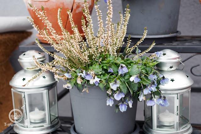 Was muss man bei Topfpflanzen im Winter beachten? - Gartenblog Topfgartenwelt