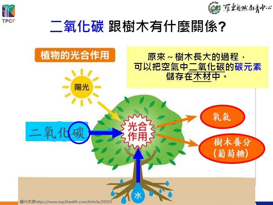 大樹「碳」險隊 - 認識樹木的新價值