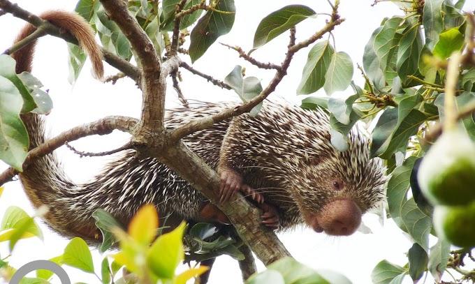 Fauna: Ceará lança lista de animais encontrados no estado