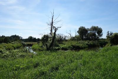 Rawka pośród puszczańskiej zieleni