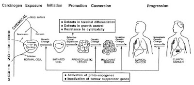 Carcinogenesis involves exposure to a carcinogen that provokes an initial genetic mutation