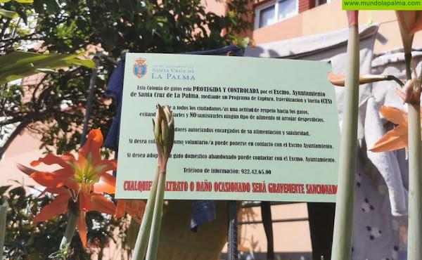 Santa Cruz de La Palma trabaja para regular las colonias de gatos de la capital