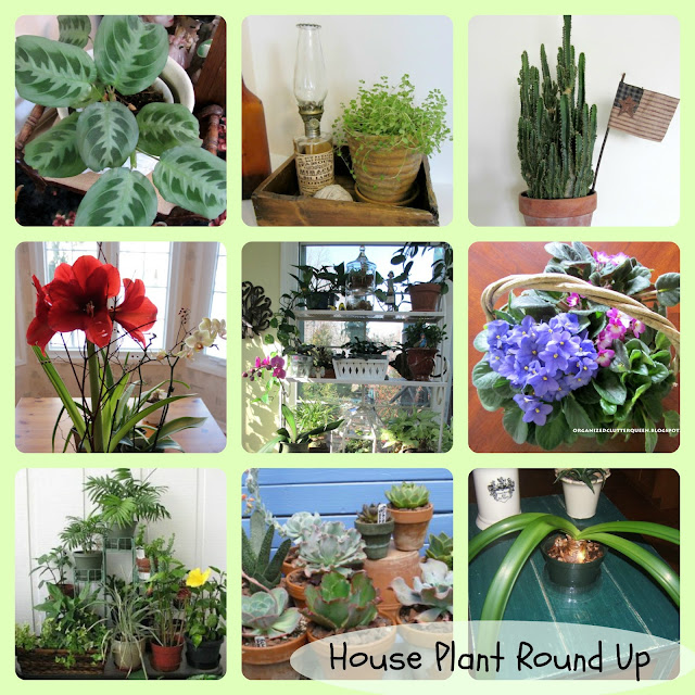 House Plant Round Up