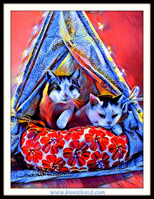 2 cats in a tent, cats go glamping, cute cats