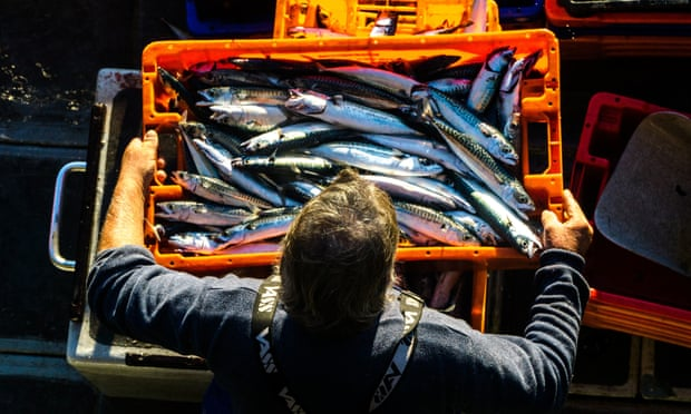 Last year 60% of the mackerel Iceland caught came from from international waters.