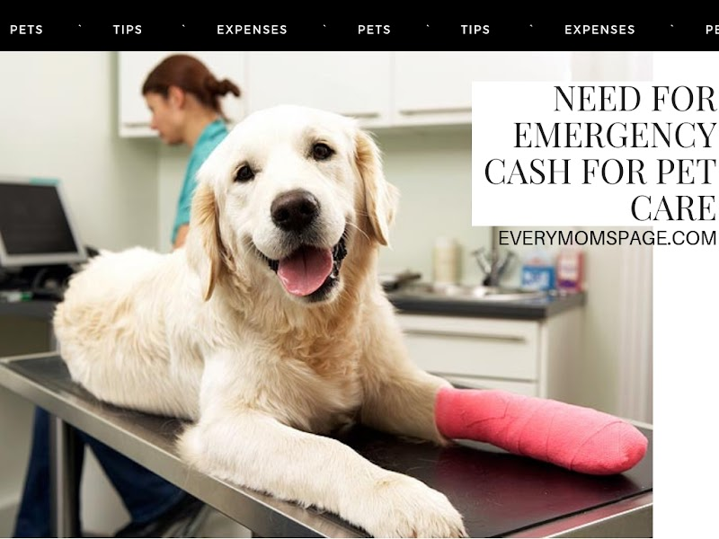 Emergency Cash For Pet Care