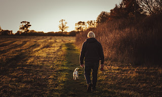 https://www.fomobones.com/blog/dogs-are-baby-boomers-best-friend/