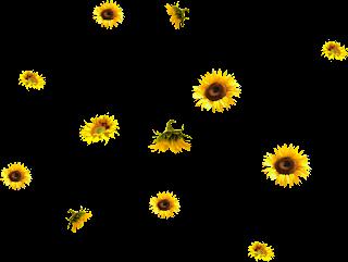 Resultado de imagen para Barras y separadores de girasoles y margaritas