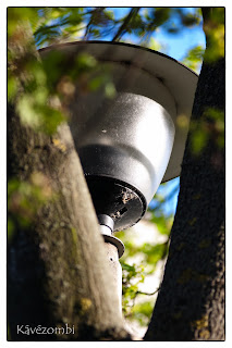 Két faág között egy utcai lámpa búrája
