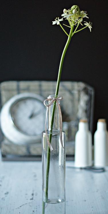 Blog + Fotografie by it's me! - Gärtnerschreck Milchstern in einer Glasflasche