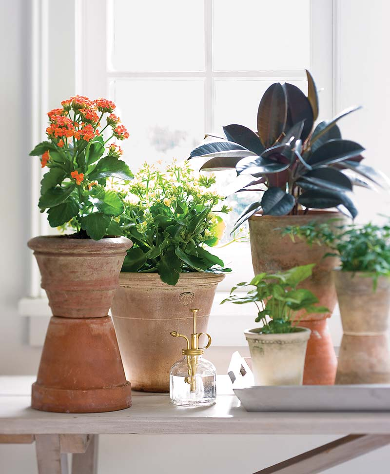 The Best Plants to Purify the Air in Your Home