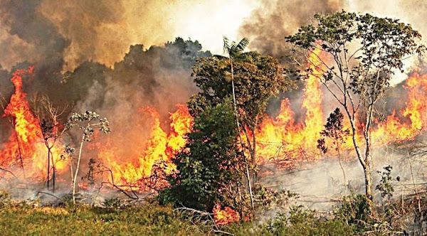 Πυρκαγιές Αμαζόνιου: Εικόνες από το Διάστημα Δείχνουν Πόσο Άσχημη και Τραγική Είναι η Κατάσταση