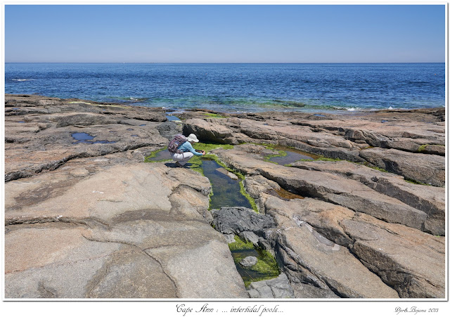Cape Ann: ... intertidal pools...