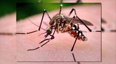 Differential diagnosis of malaria fever and virus