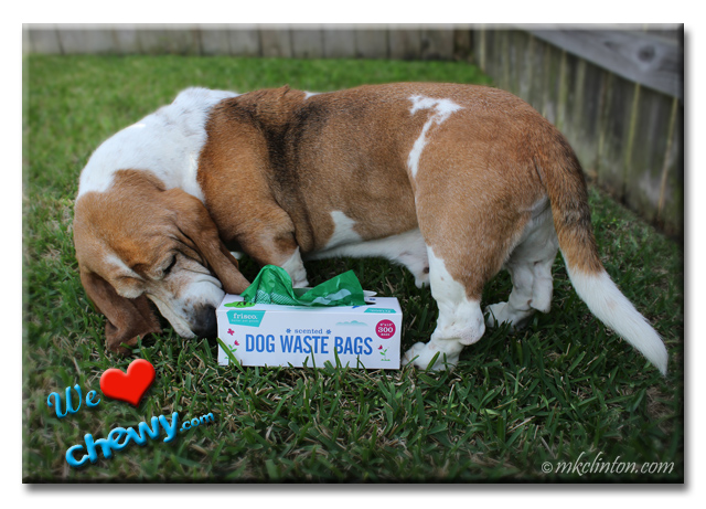 Basset Hound smelling a box of dog waste bags