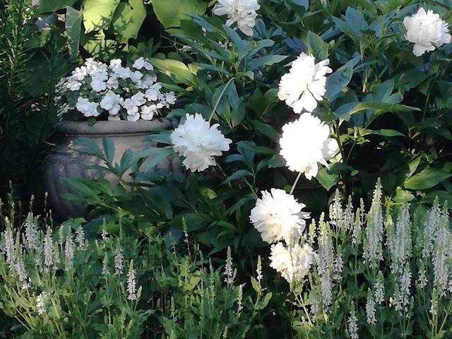 kamienna donica, white garden