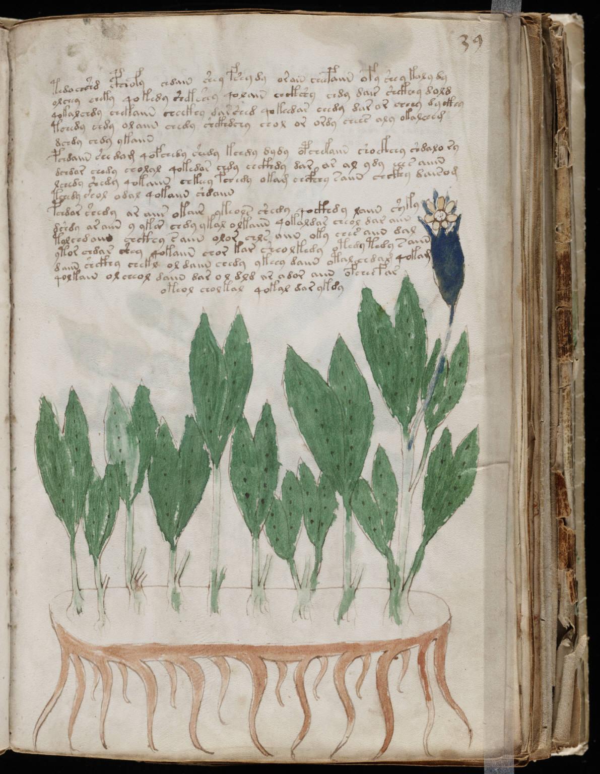 manuscrito075