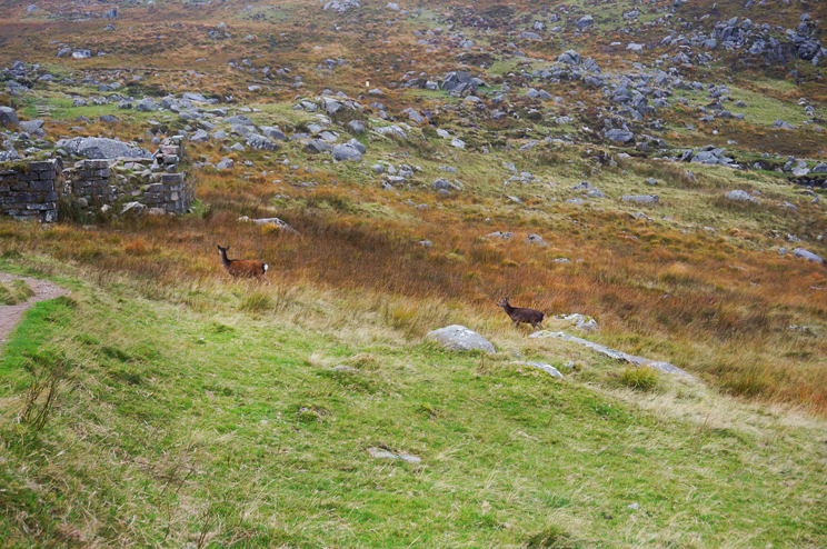 Deer sighting in Glendalough