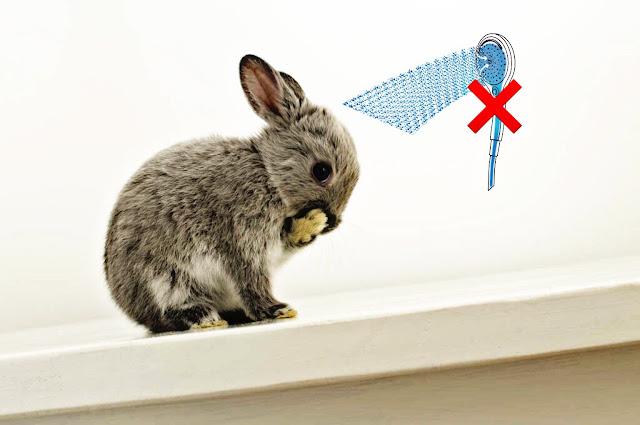 limpieza de un conejo