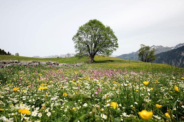 Alpine Meadow by Lukas Gächter on Unsplash