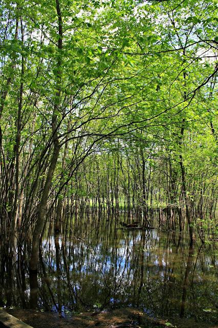 Wetlands at Ryerson Woods