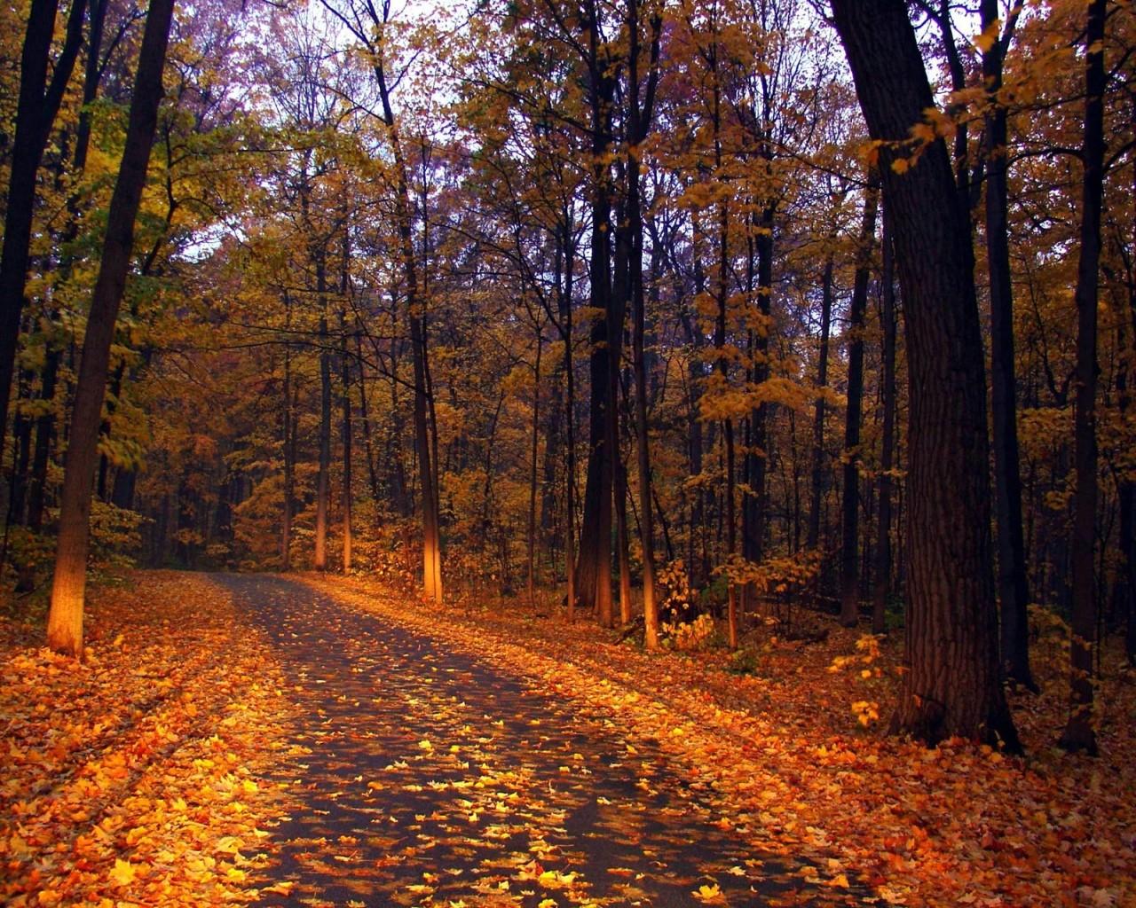 Compartiendo fondos fondos de pantalla paisajes de oto o - Descargar autumn leaves ...