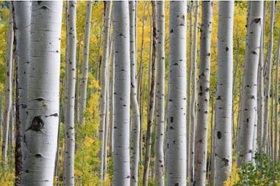 Hutan, Jenis Hutan, Hutan Musim