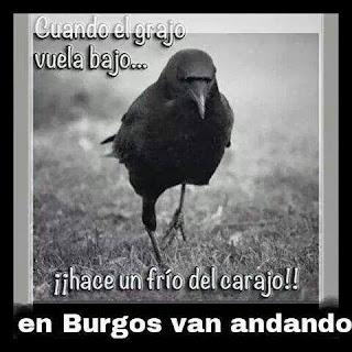 """Imagen de un grajo y la leyenda: """"Cuando el grajo vuela bajo ¡¡hace un frío del carajo!! en Burgos van andando"""