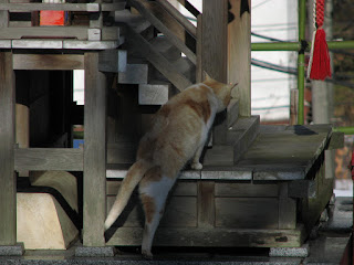 猫の初詣 よっこらしょ