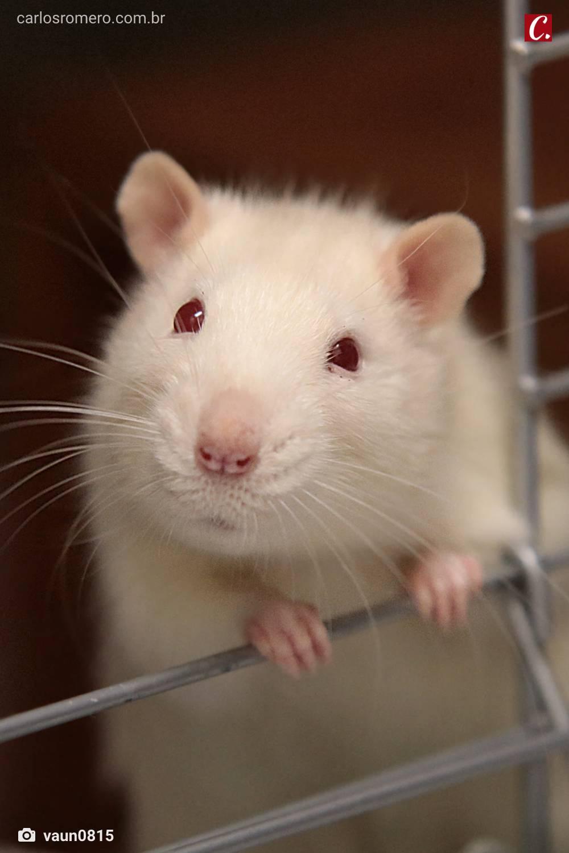 mascote amor aos bichos animais domesticos amor a natureza criar rato ambiente de leitura carlos romero jose mario espinola