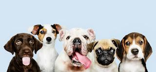 köpek ile ilgili görseller Köpek Yavrusu Fotoğraflar, Resimler Ve Görseller Birbirinden Sevimli Köpekler En Sevimli Köpek Fotoğrafı Köpek Resimleri En Güzel Resimler Fotoğraflar Resimleri Görebileceğiniz En Sevimli Yavru Köpek Dünyanın En Sevimli Köpek Fotoğrafı Yılının En iyi Köpek Fotoğrafları Seçildi Terk Edilmiş Mekanlarda Çekilmiş Muhteşem Köpek Fotoğrafları Yılın Köpek Fotoğrafçısı Köpek Fotoğrafları Haberleri Köpek Fotoğrafçıları Yarışması Köpek Görseller, Stok Fotoğraflar ve Vektörler Ücretsiz Köpek ve Hayvan Görseli Köpek Resimleri Manzara Resimleri Yavru Köpek Resimleri Sadece En Tatlı Köpekler En Şirin Yavru Köpek Fotoğrafları