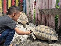 Jogja Exotarium, Kebun Binatang Wisata Alternatif di Yogyakarta