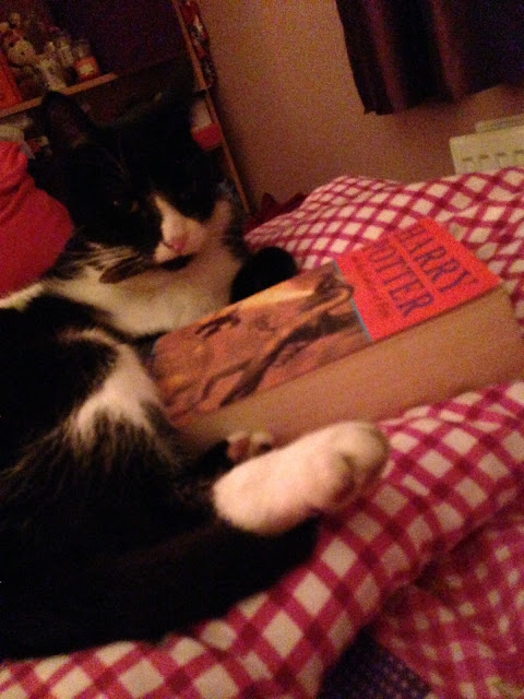 Cat reading Harry Potter