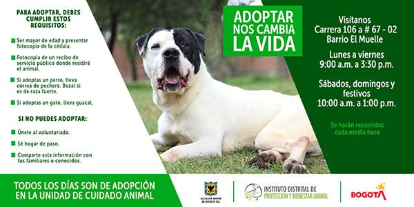 Primera-jornada-adopcion-animal-Bogota