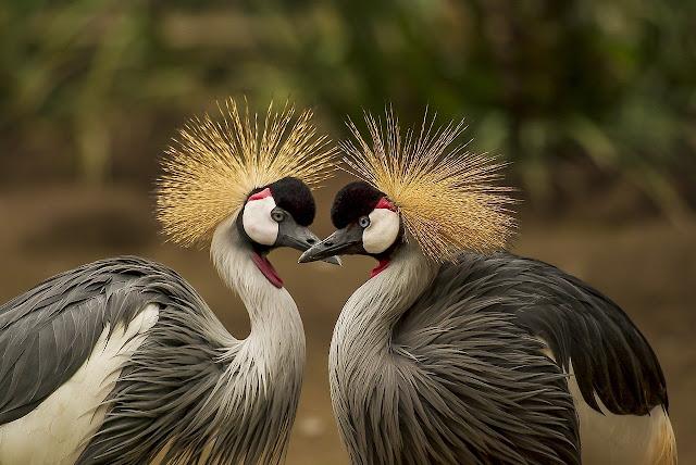 أحلي الوان الطيور المختلفة وصورها