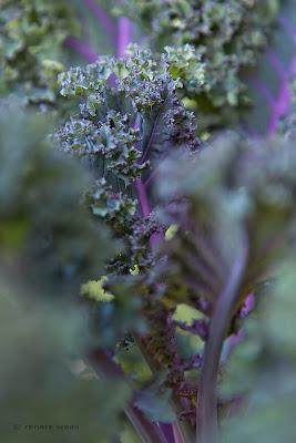Gemüsegarten für Geniesser - Renate Waas