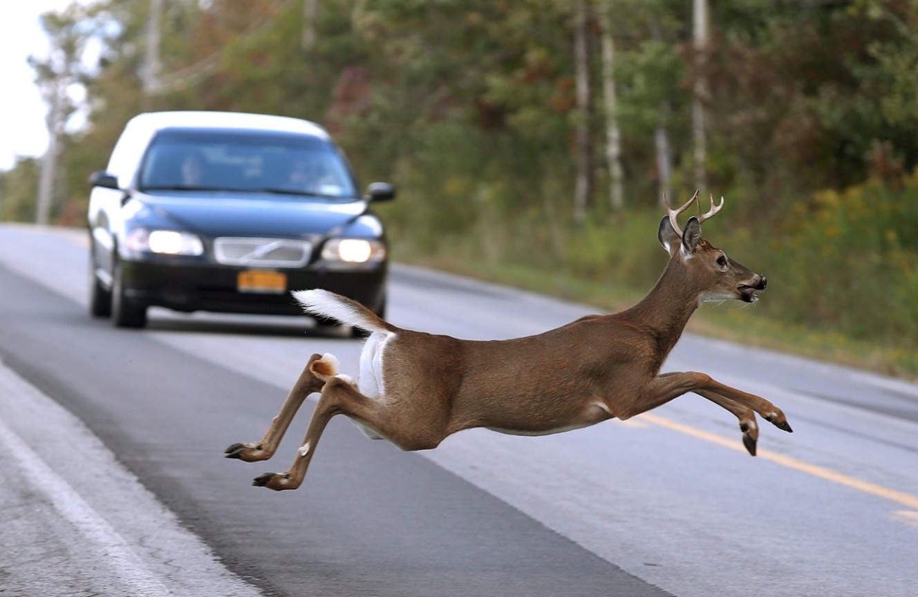PA Environment Digest Blog: Game Commission: Deer Are On The
