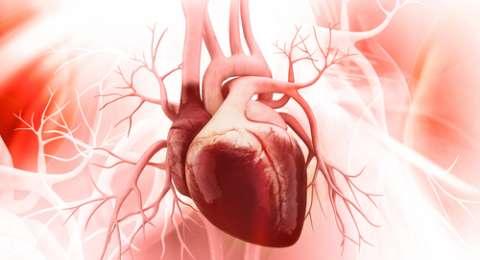 Obat Penyakit Jantung dan Pembuluh Darah