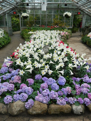 Massed Florist Hydrangeas and Easter Lilies at the Centennial Park Conservatory Easter Flower Show by garden muses-not another Toronto gardening blog