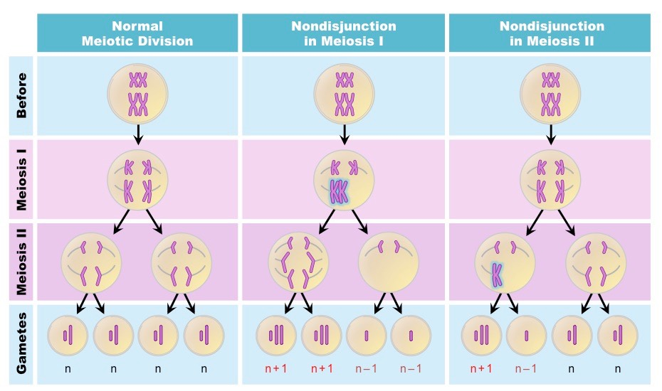 hogy hogyan támogassák HPV immunitás