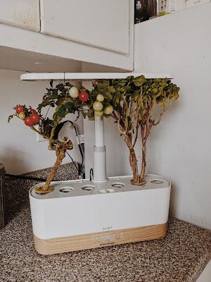 aerogarden goodful sustainability indoor garden tech gift guide 2020
