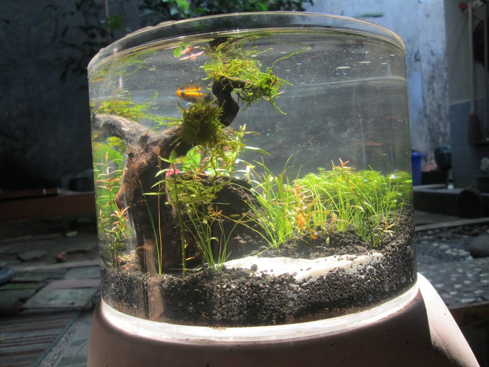 aquaplantarium: Tips Untuk Membuat Nano Aquascape