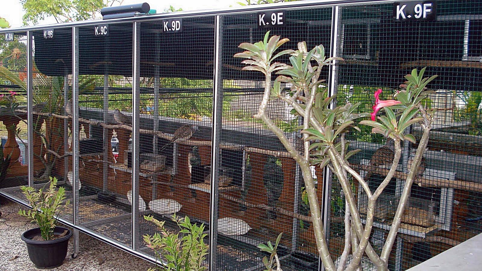 sarang burung perkutut - agungjakanugraha.blogspot.com