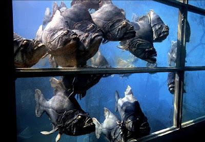 Piranha 1978 Image 7