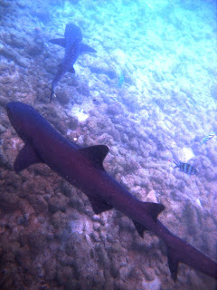 penangkaran hiu karimunjawa